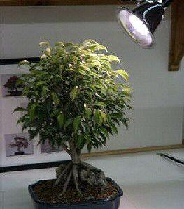 Grow Light Kit - 60 Watt
