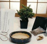 Starter Kit Make Your Own Bonsai Tree